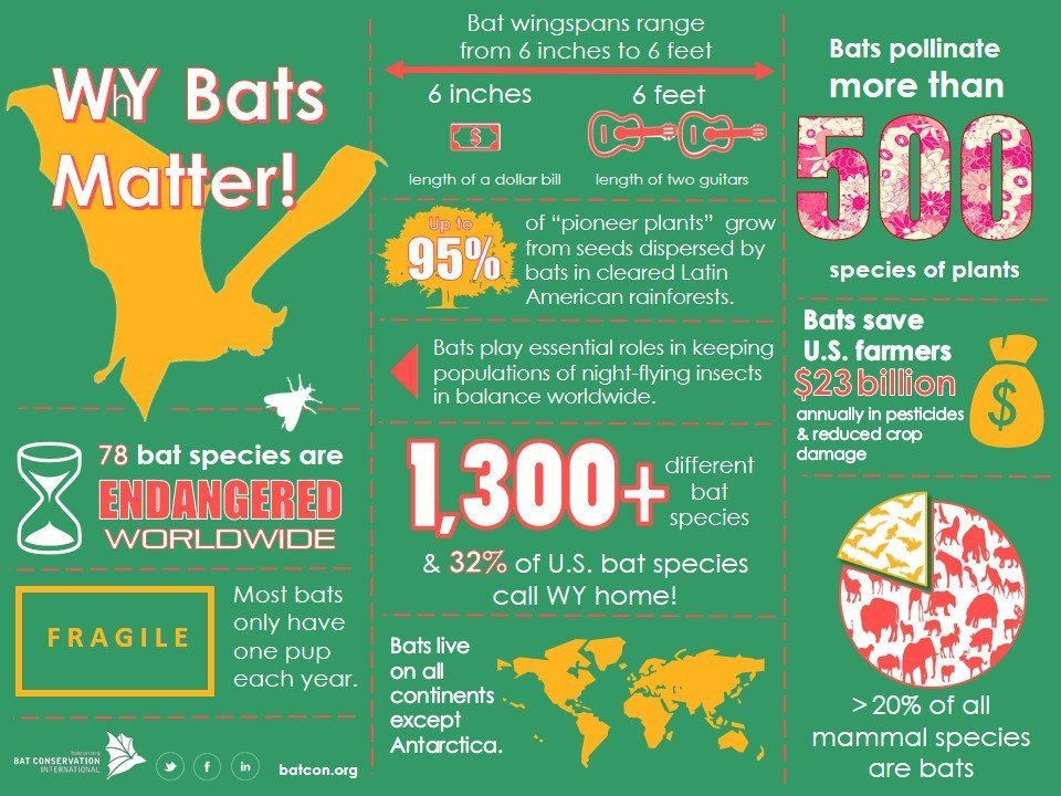 Fun Facts on Bats